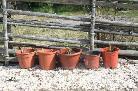 omplanterade