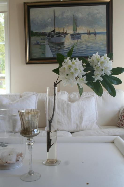 Ett misstag när jag putsade till rhododendron 'Cunningsham white' blev en fin blomma inne..