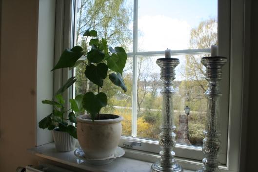 omplanterad sydostasiatisk växt