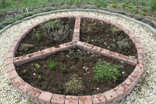 Örtagården är omorganiserad och rensad