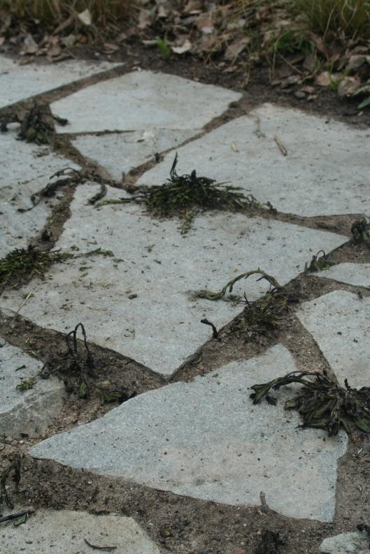 P har sprutat och bränt bort ogräs