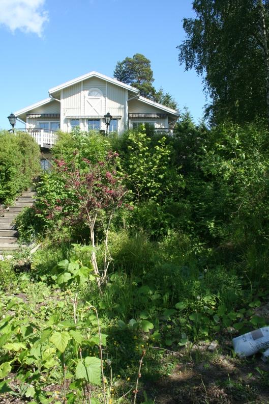 Ena sidan av platån. Den som inte är iordninggjord. Idag hemvist för plantor jag inte vet vart jag ska göra av just nu och ogräs. Här är min dröm att skapa en liten avskärmad djungel med bara gröna växter som bambu, gunnera, rodgesia, prydnadsgräs mm. Flera har påpekat att det ju redan ser ut som en djungel och det har de rätt i....Men bort med ölandstok, sly och annat och in med vattenelement och andra växter. Ett litet större projekt som jag inte vet om jag hinner i år, men planera det hinner jag nog.