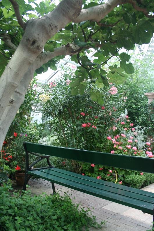 Fin sittplats under fikonträdet