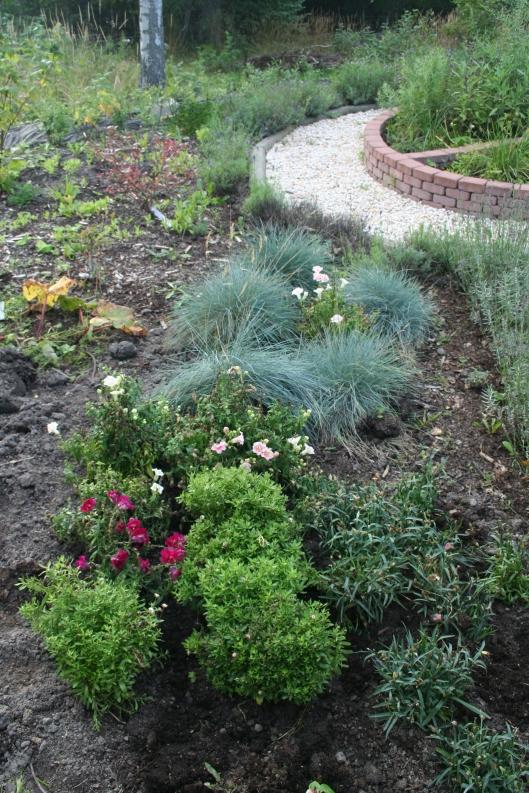 Har grävt ner en massa plantor som stått i kruka. Vinterförvaring