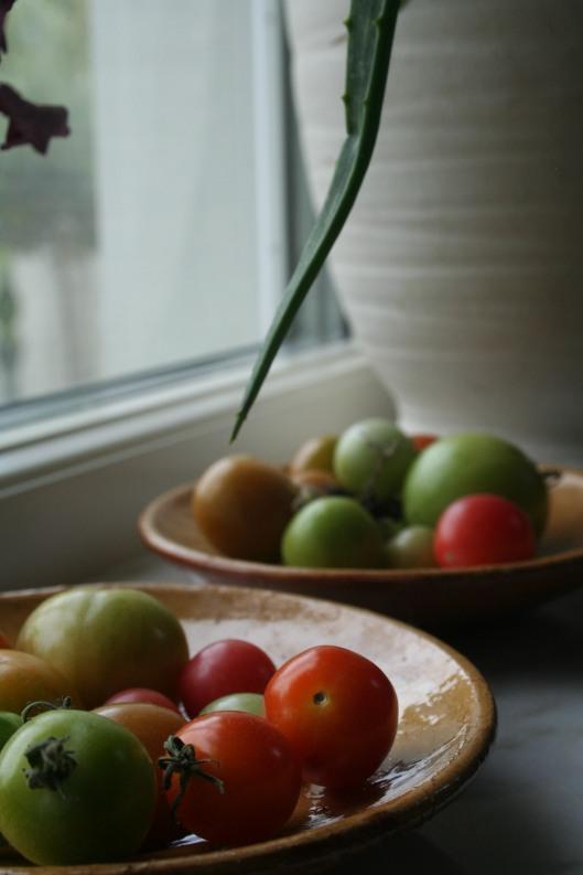 Tomaterna är avplockade och blir solmogna i köksfönstret