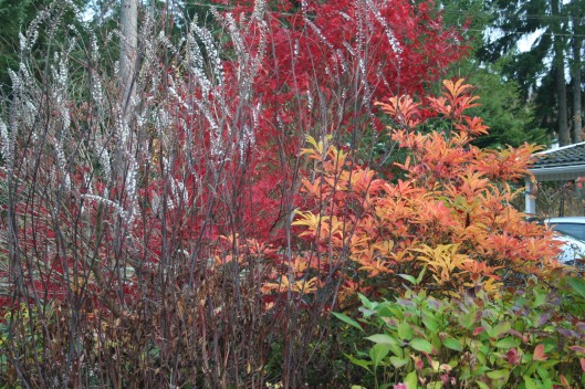 Plantering med höstsilverax, japansk lönn, Hortensia Preziosa, azaleor och fjärilsbuske.