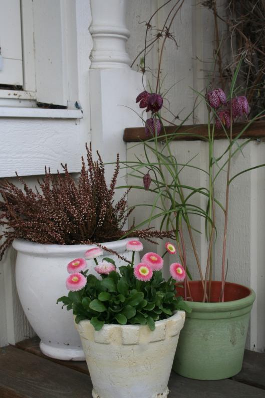 Blommor på farstun