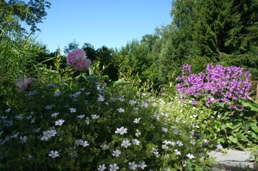 Pion, trädgårdsnäva och praktbetonika